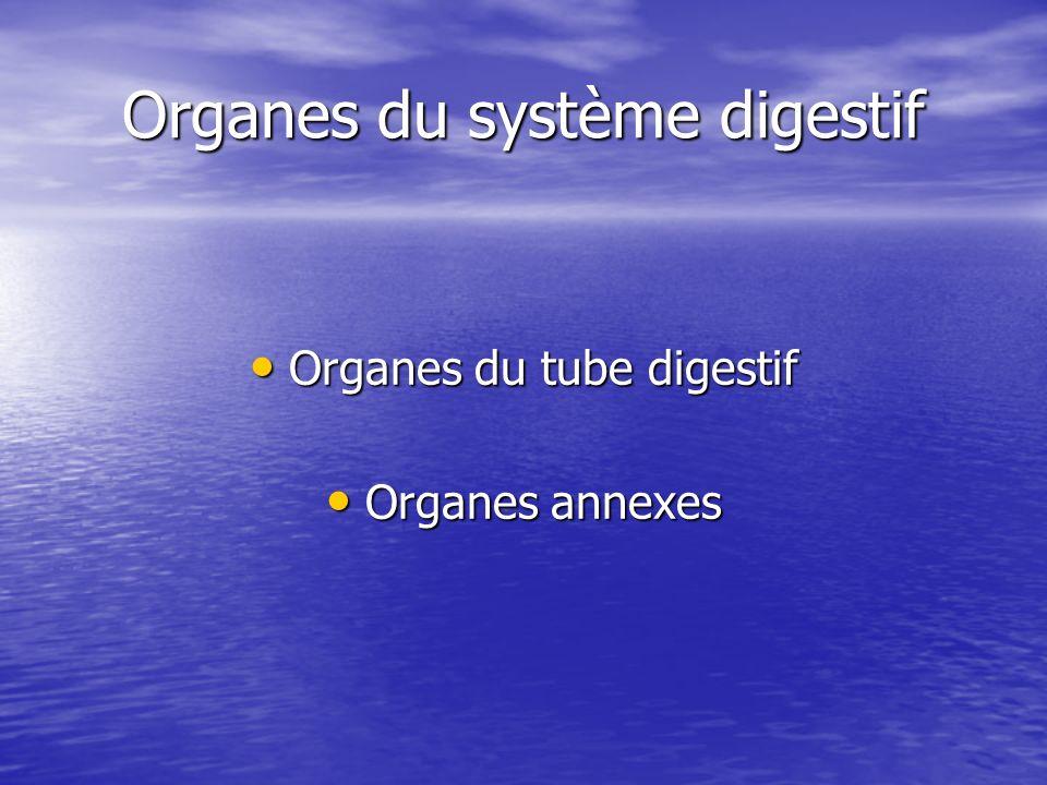 Organes du système digestif