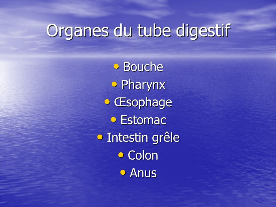 Organes du tube digestif