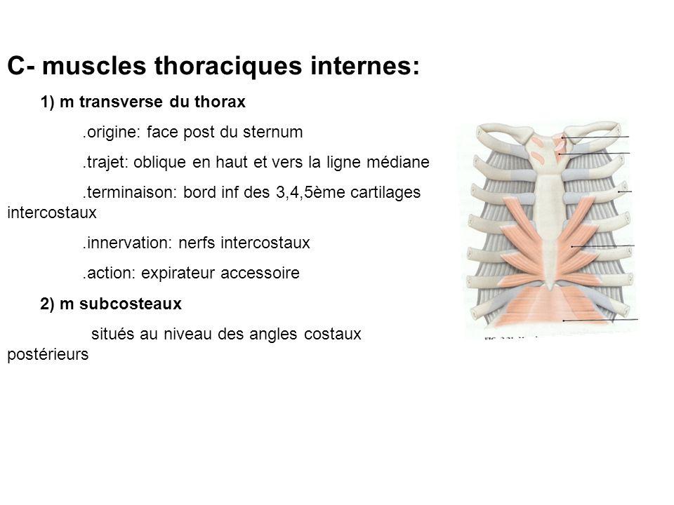 C- muscles thoraciques internes: