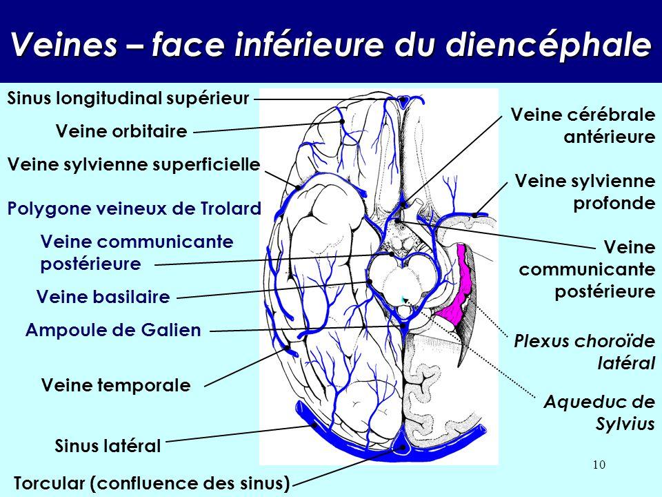 Veines – face inférieure du diencéphale