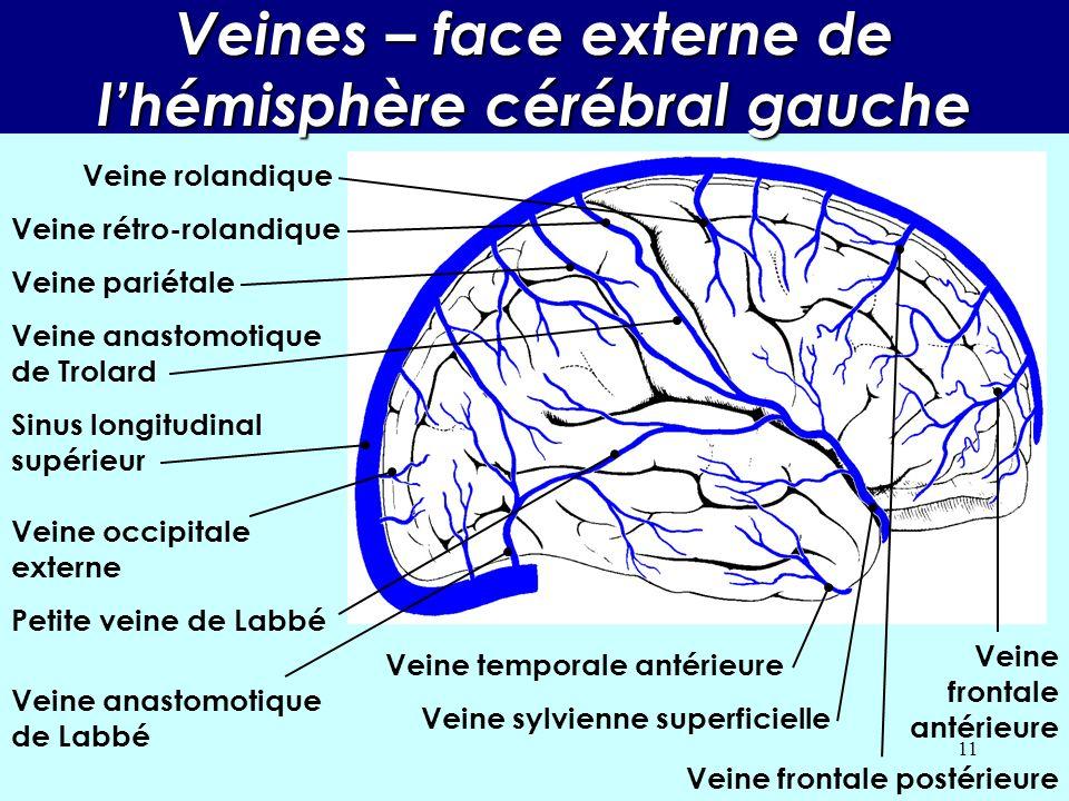 Veines – face externe de l'hémisphère cérébral gauche