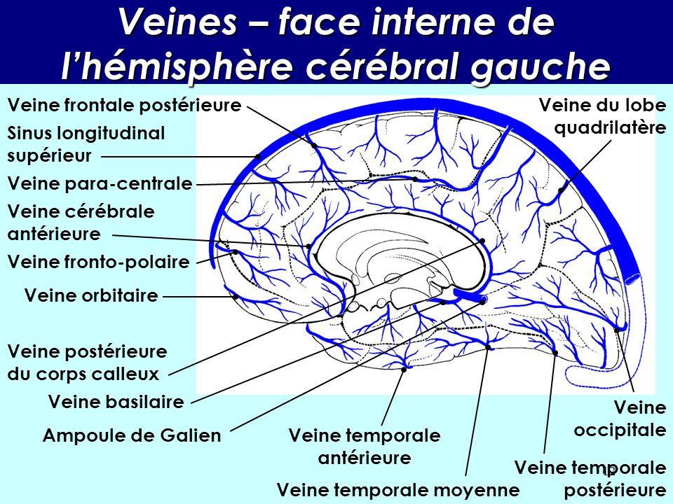 Veines – face interne de l'hémisphère cérébral gauche