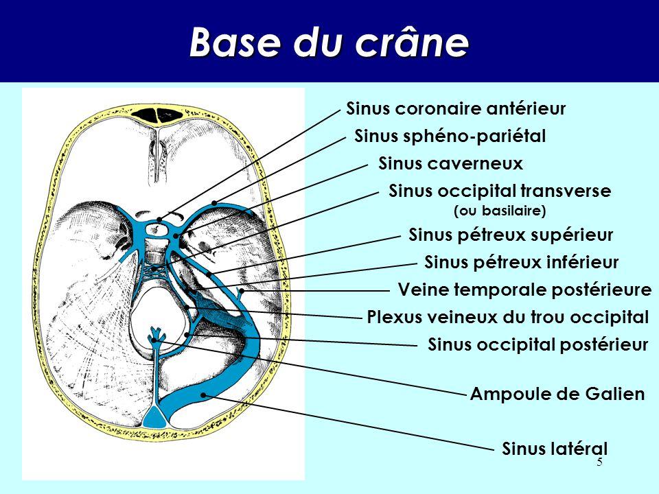 Base du crâne Sinus coronaire antérieur Sinus sphéno-pariétal