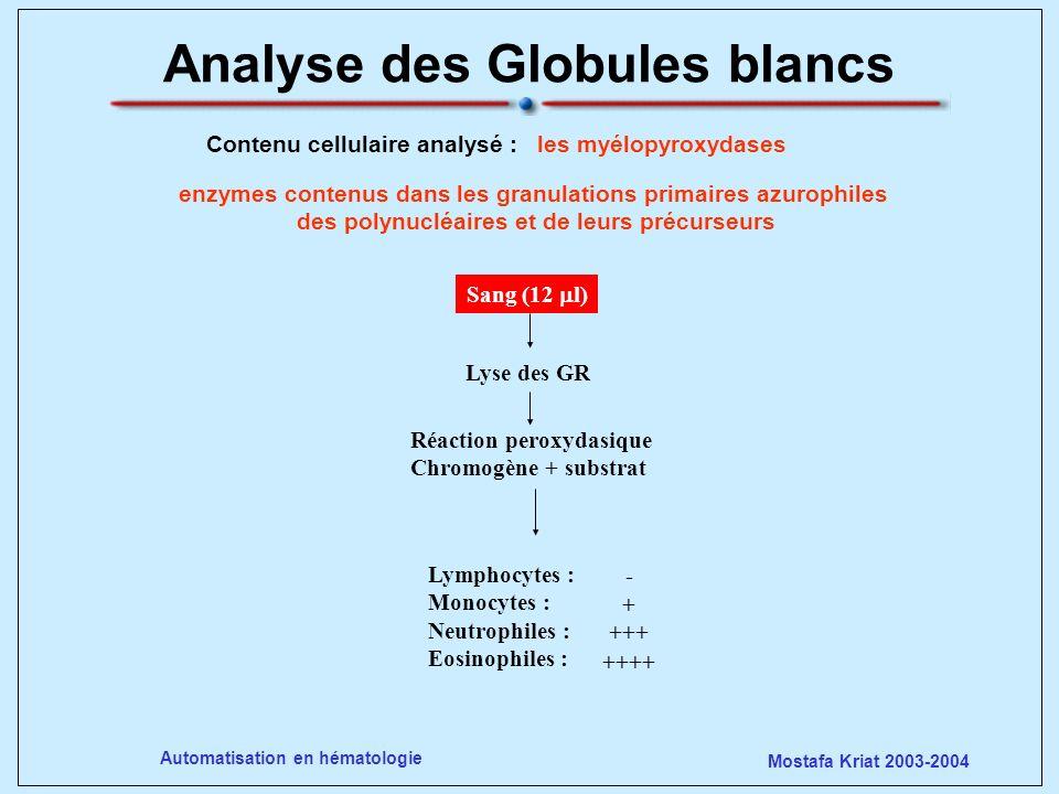 Analyse des Globules blancs
