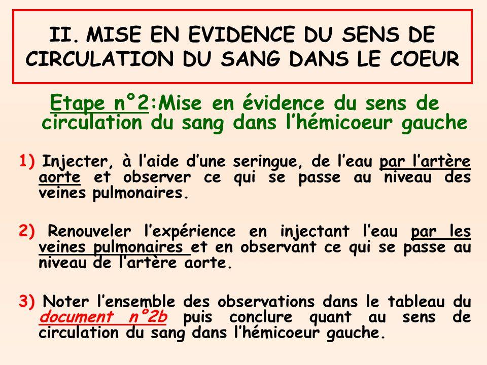II. MISE EN EVIDENCE DU SENS DE CIRCULATION DU SANG DANS LE COEUR