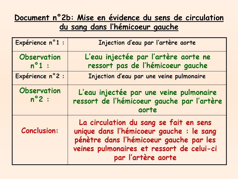 Document n°2b: Mise en évidence du sens de circulation du sang dans l'hémicoeur gauche