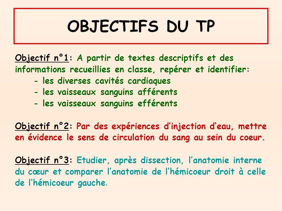 OBJECTIFS DU TP Objectif n°1: A partir de textes descriptifs et des
