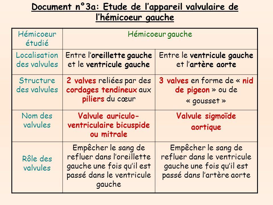 Document n°3a: Etude de l'appareil valvulaire de l'hémicoeur gauche
