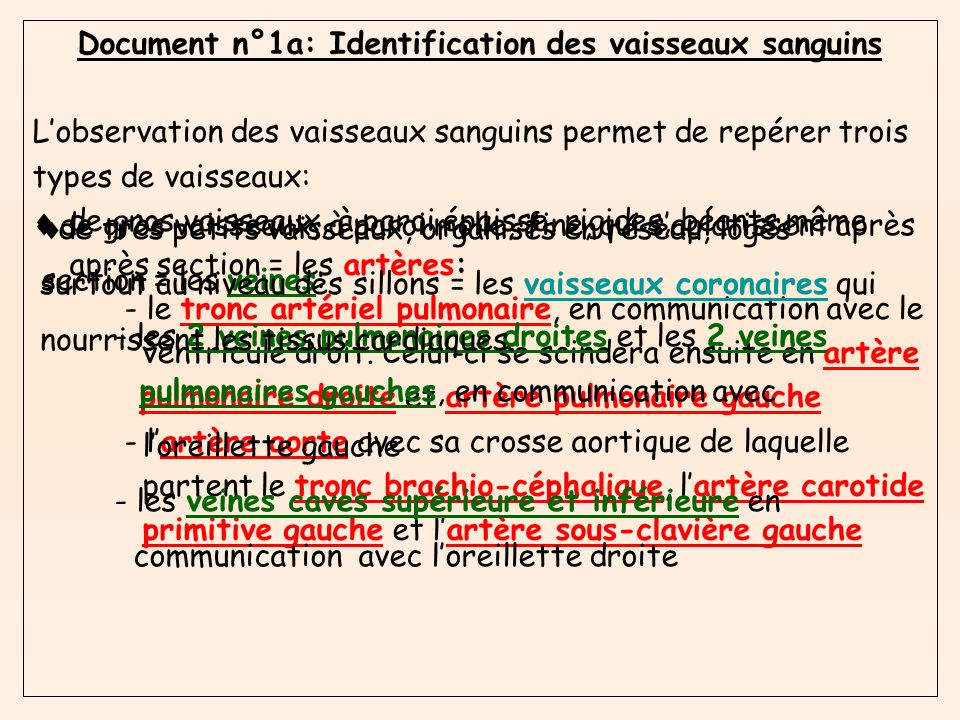Document n°1a: Identification des vaisseaux sanguins