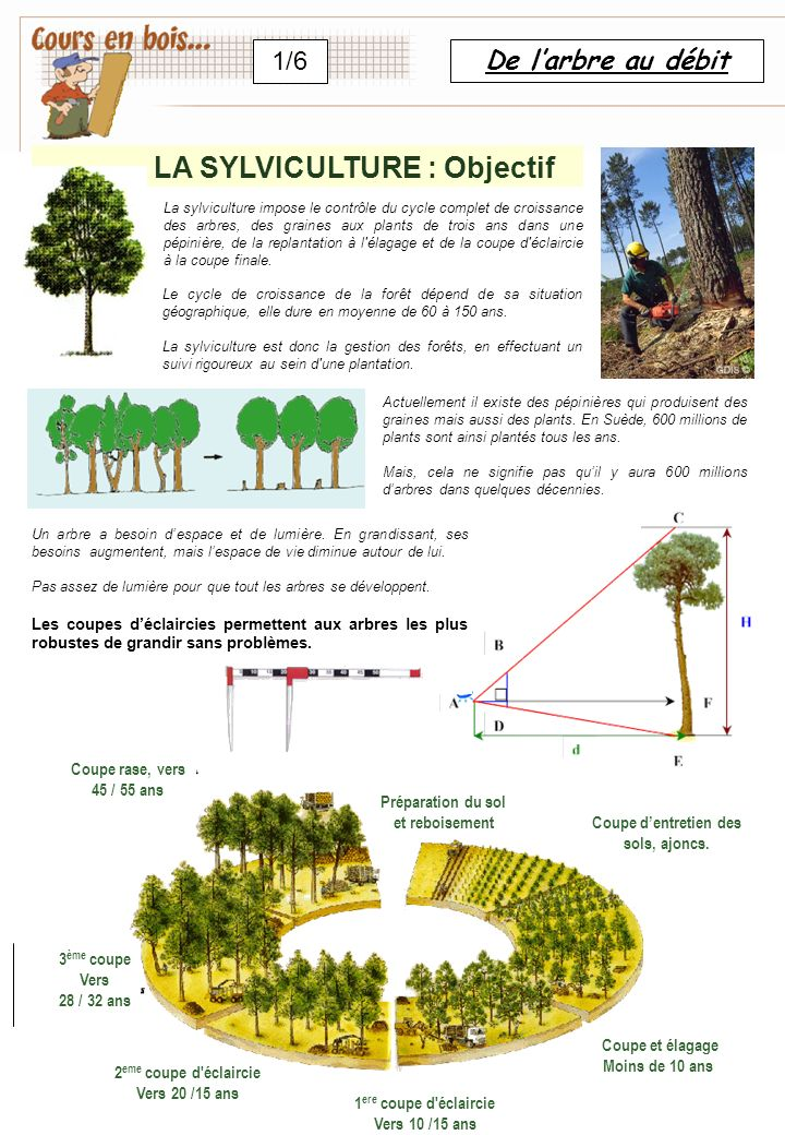 LA SYLVICULTURE : Objectif Coupe d'entretien des sols, ajoncs.