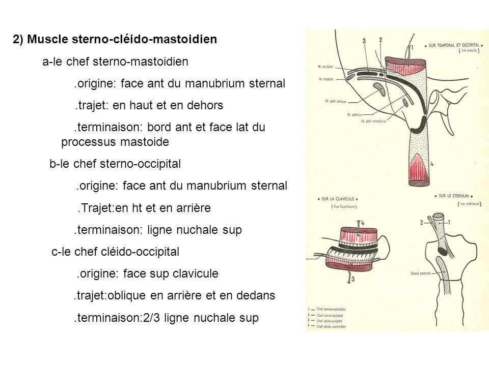 2) Muscle sterno-cléido-mastoidien