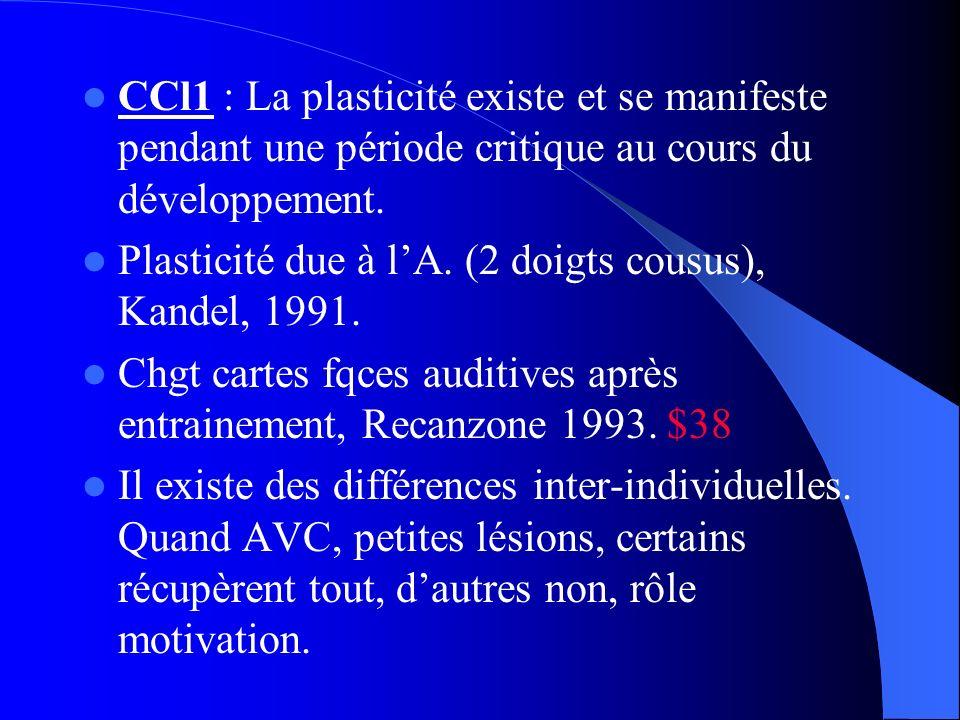 CCl1 : La plasticité existe et se manifeste pendant une période critique au cours du développement.