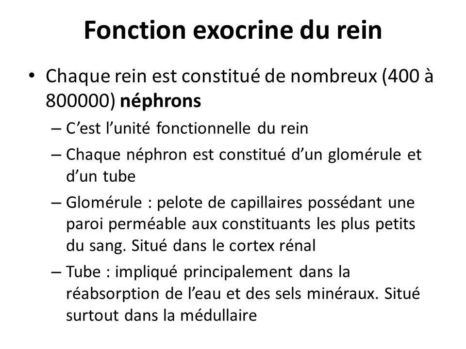 Fonction exocrine du rein