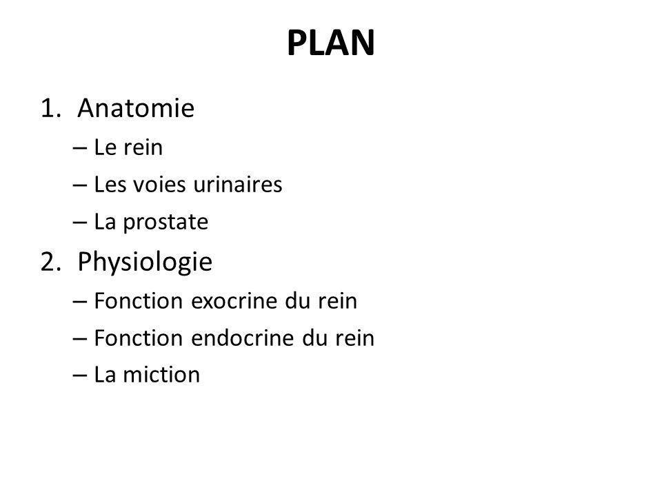 PLAN Anatomie Physiologie Le rein Les voies urinaires La prostate