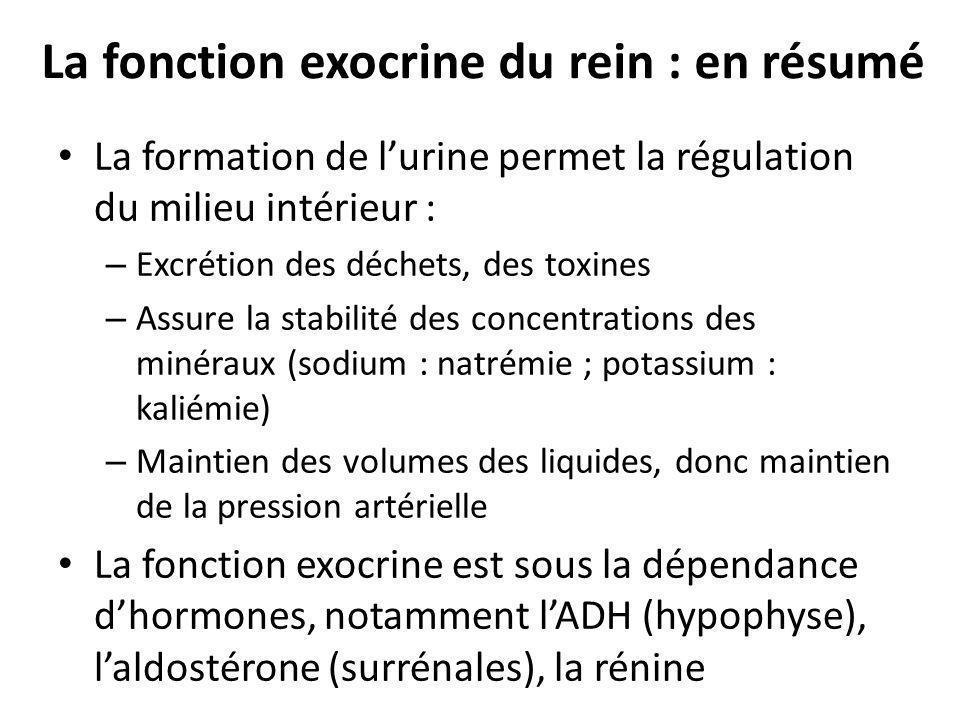 La fonction exocrine du rein : en résumé