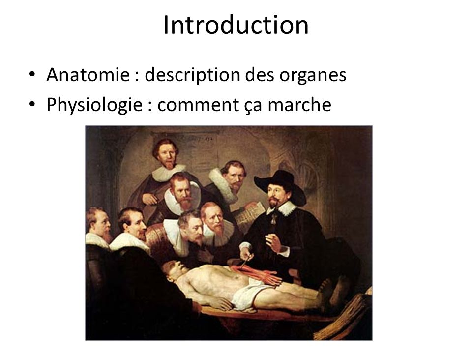 Introduction Anatomie : description des organes