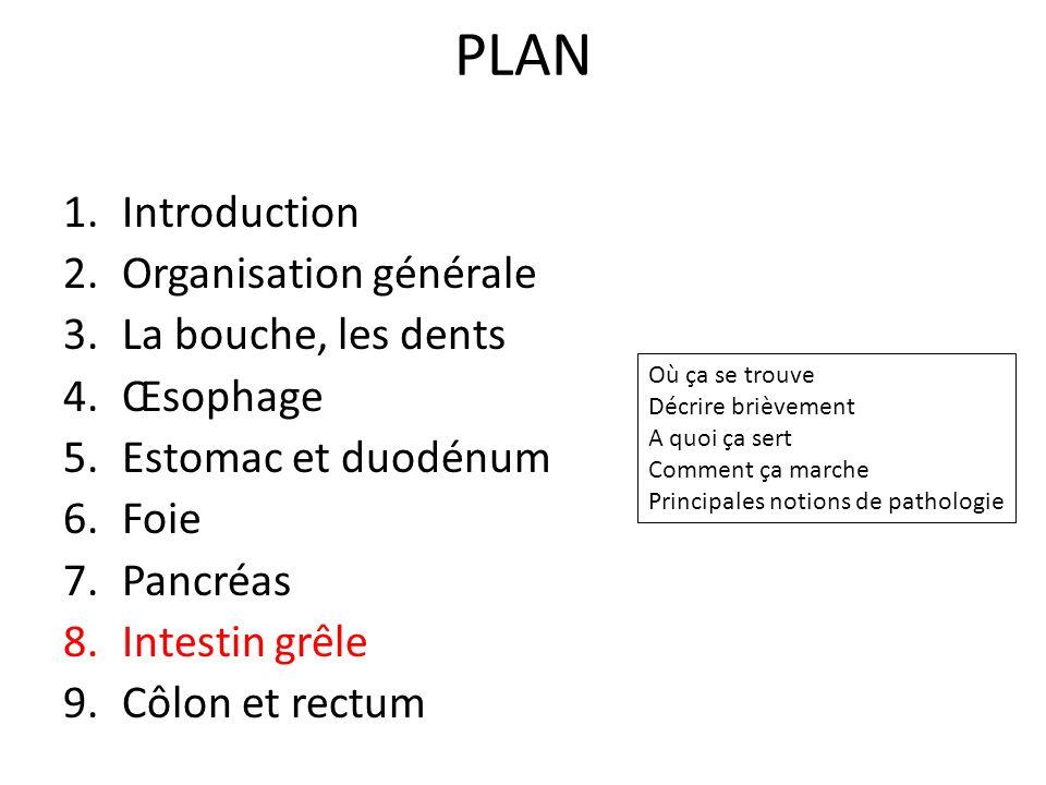 PLAN Introduction Organisation générale La bouche, les dents Œsophage