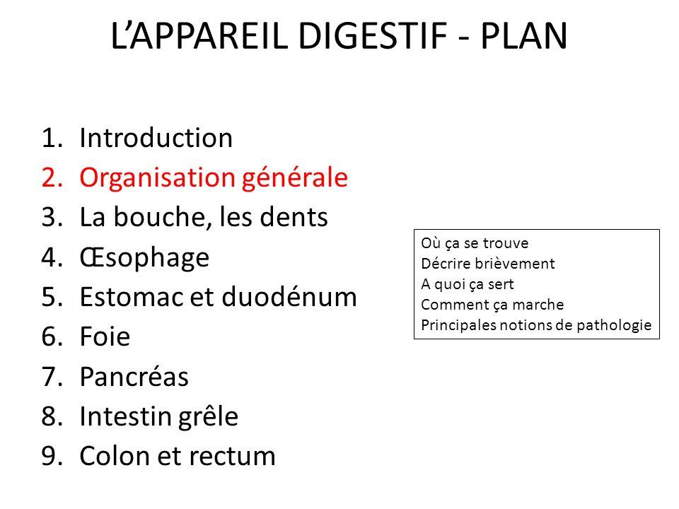 L'APPAREIL DIGESTIF - PLAN