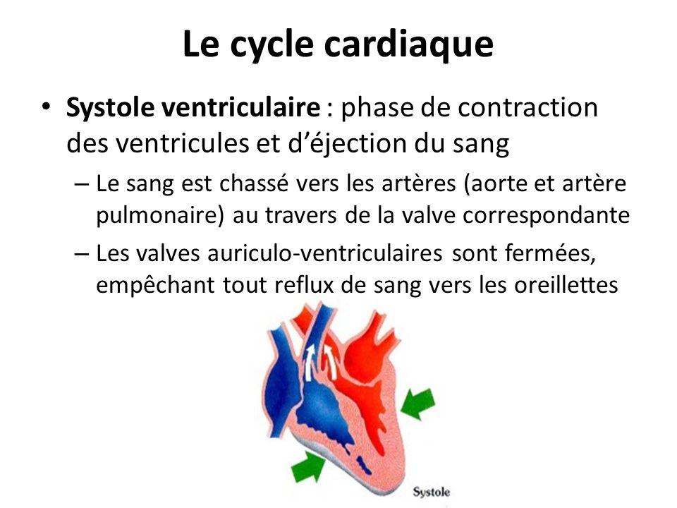 Le cycle cardiaque Systole ventriculaire : phase de contraction des ventricules et d'éjection du sang.