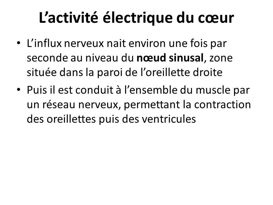 L'activité électrique du cœur