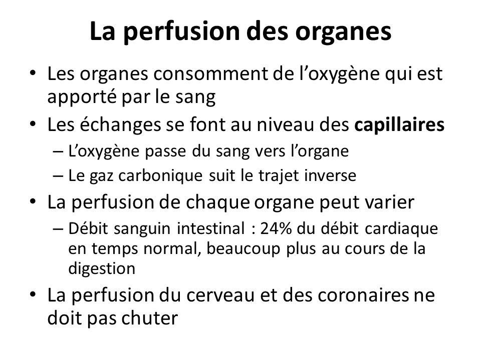 La perfusion des organes