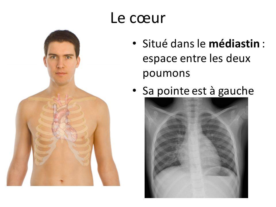 Le cœur Situé dans le médiastin : espace entre les deux poumons