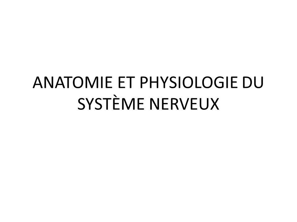 ANATOMIE ET PHYSIOLOGIE DU SYSTÈME NERVEUX