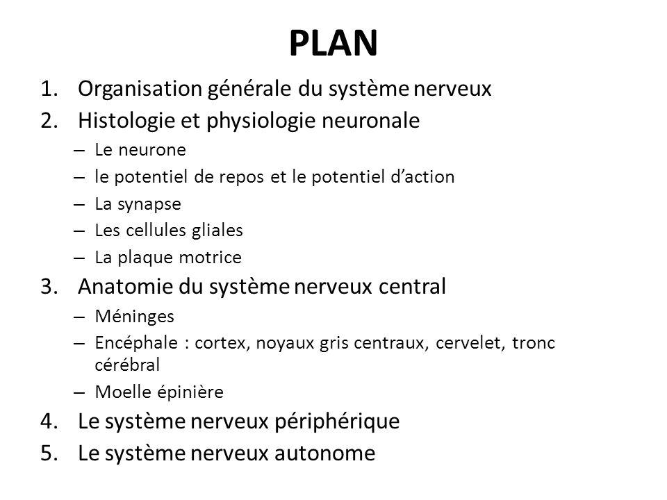 PLAN Organisation générale du système nerveux
