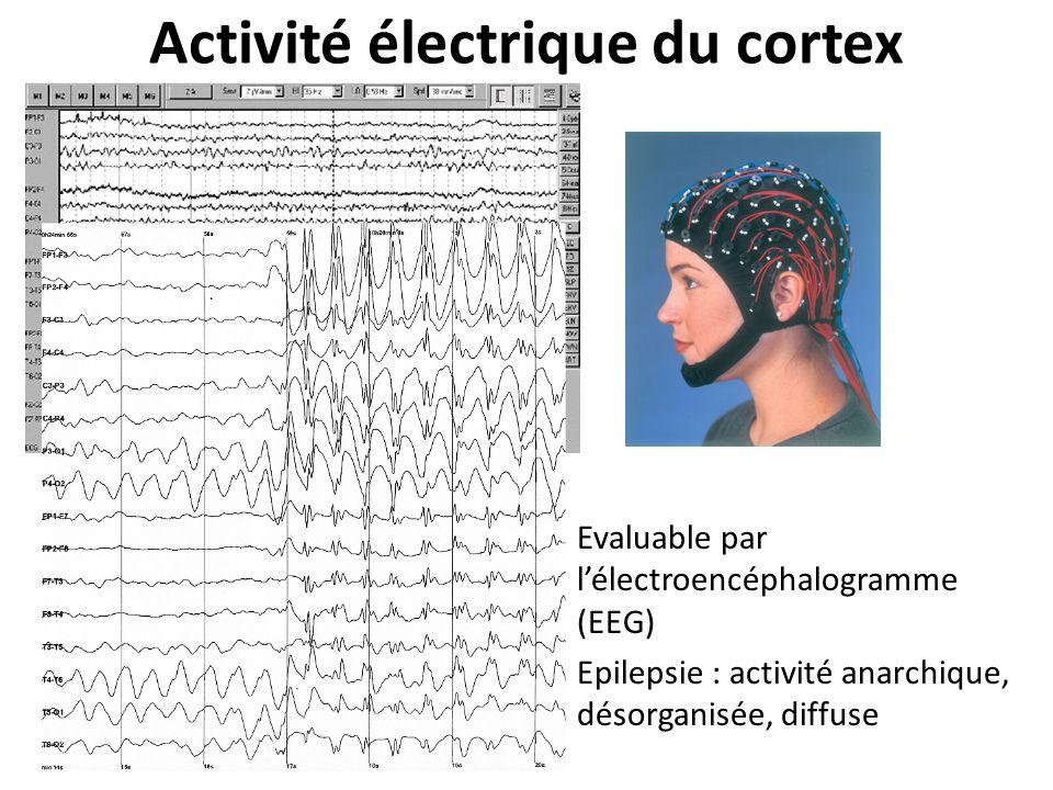 Activité électrique du cortex