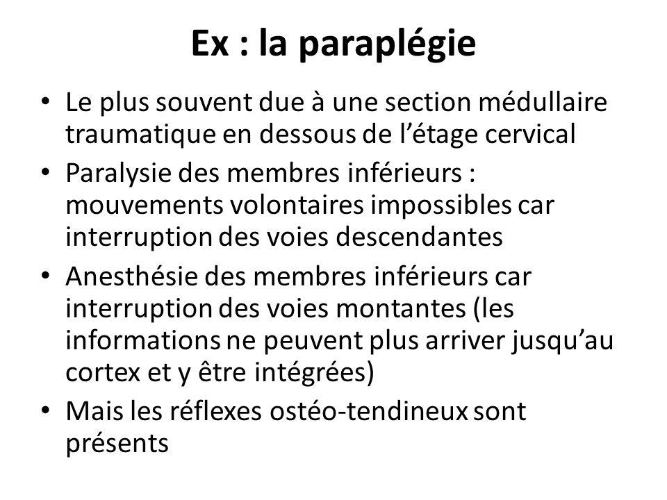 Ex : la paraplégie Le plus souvent due à une section médullaire traumatique en dessous de l'étage cervical.