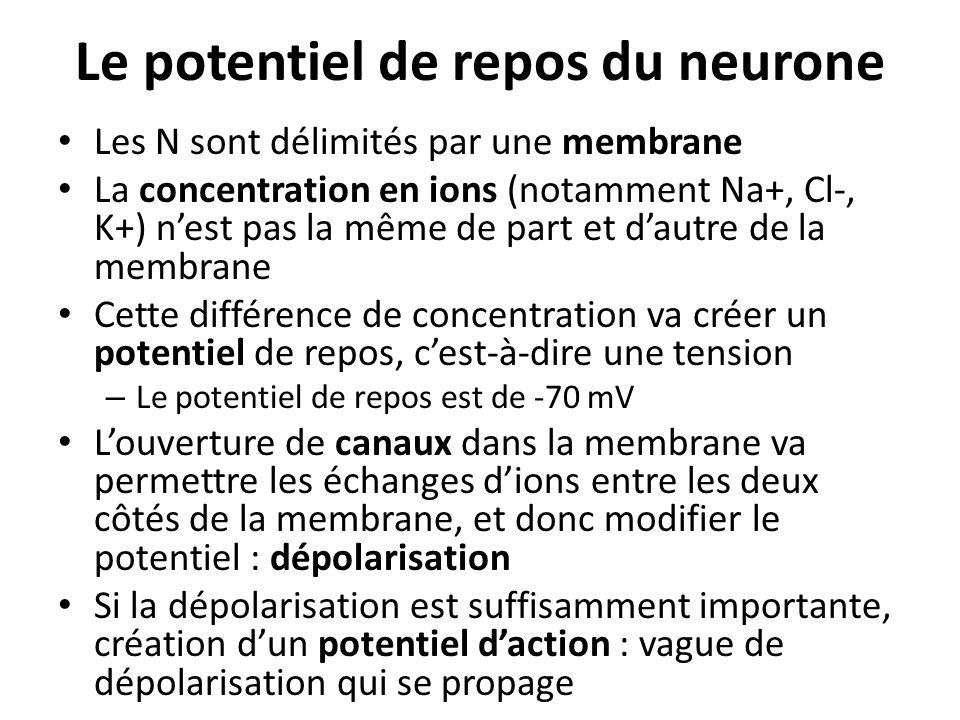 Le potentiel de repos du neurone