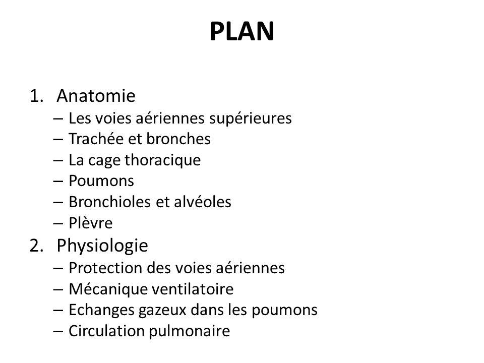 PLAN Anatomie Physiologie Les voies aériennes supérieures