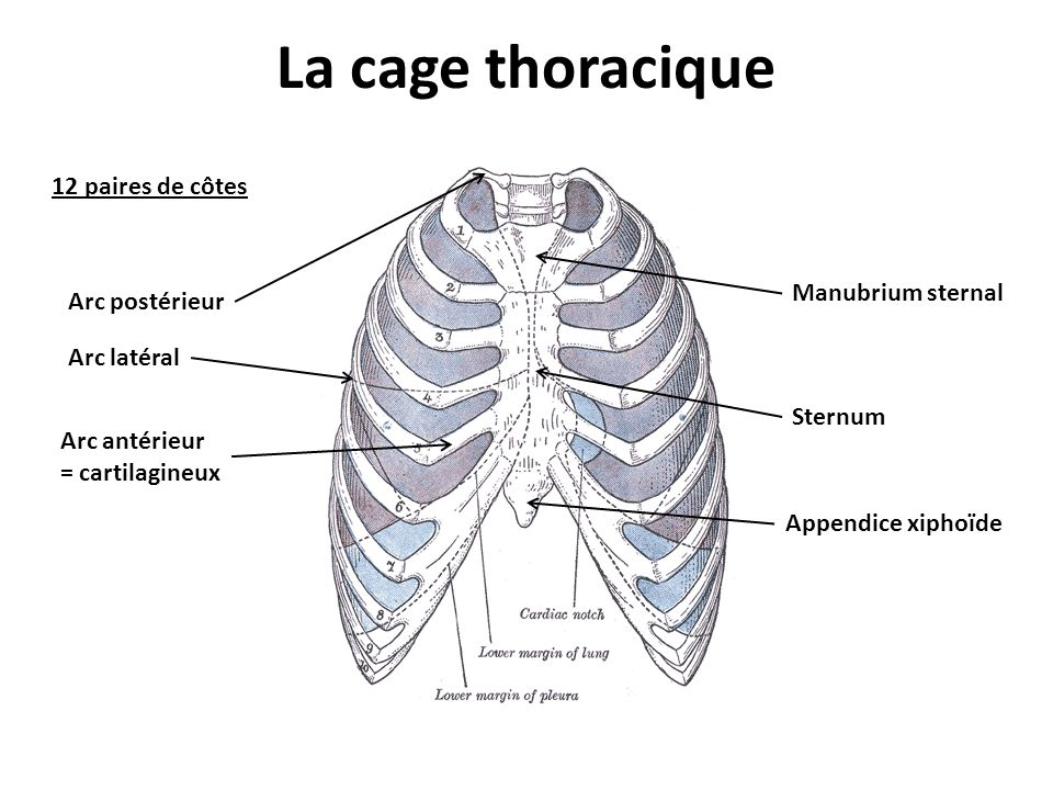 the 9 cartilages of larynx
