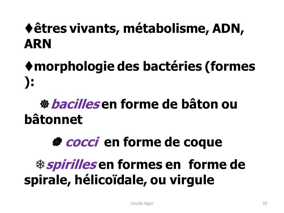 êtres vivants, métabolisme, ADN, ARN