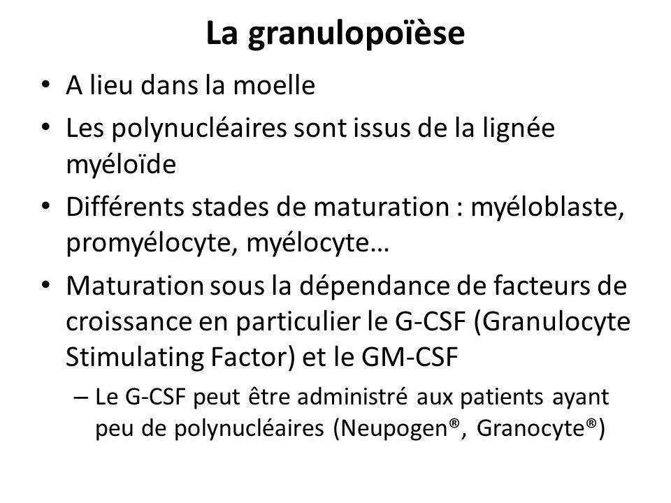 La granulopoïèse A lieu dans la moelle