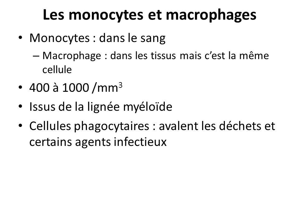 Les monocytes et macrophages