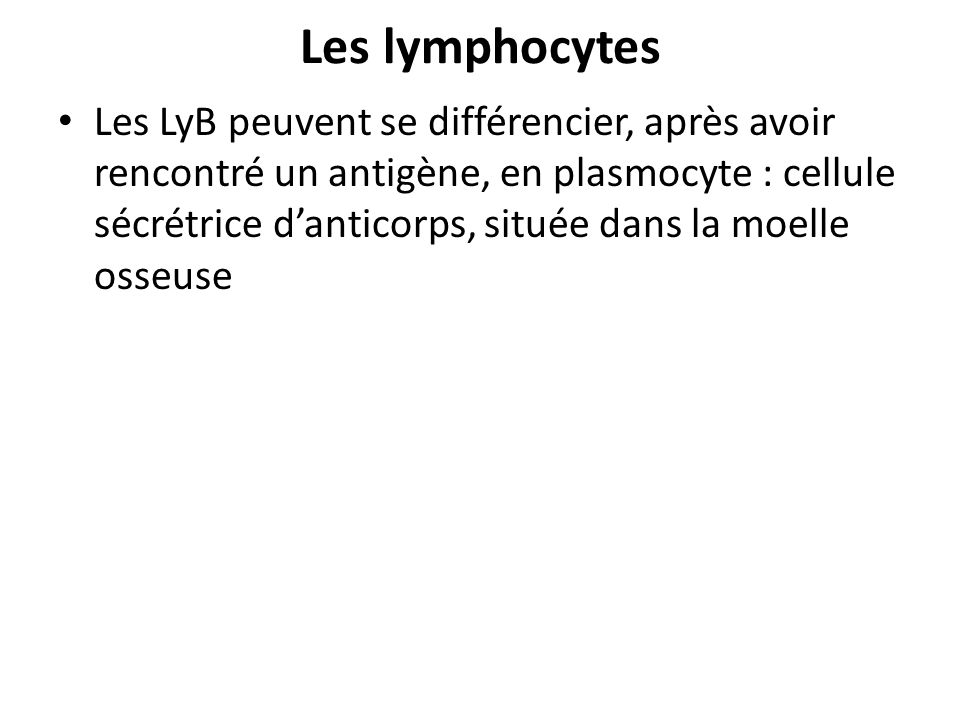 Les lymphocytes