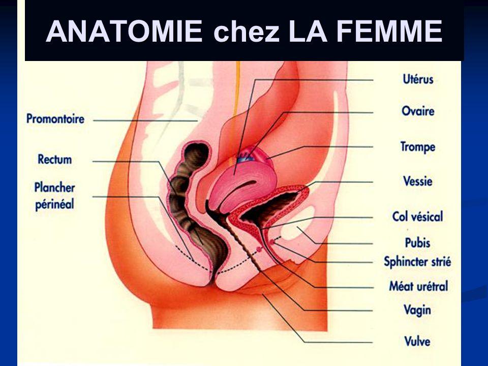 ANATOMIE chez LA FEMME
