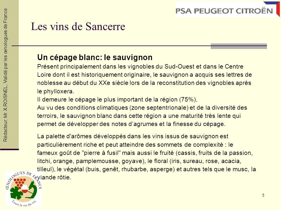 Les vins de Sancerre Un cépage blanc: le sauvignon