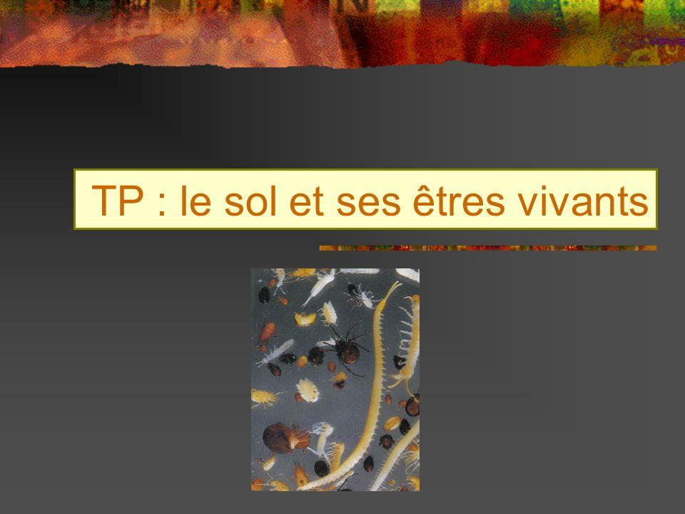TP : le sol et ses êtres vivants