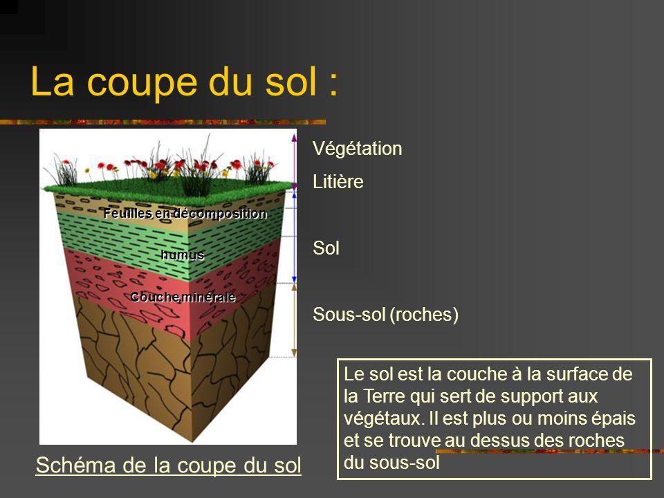 La coupe du sol : Schéma de la coupe du sol Végétation Litière Sol