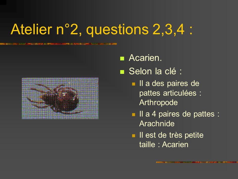 Atelier n°2, questions 2,3,4 : Acarien. Selon la clé :