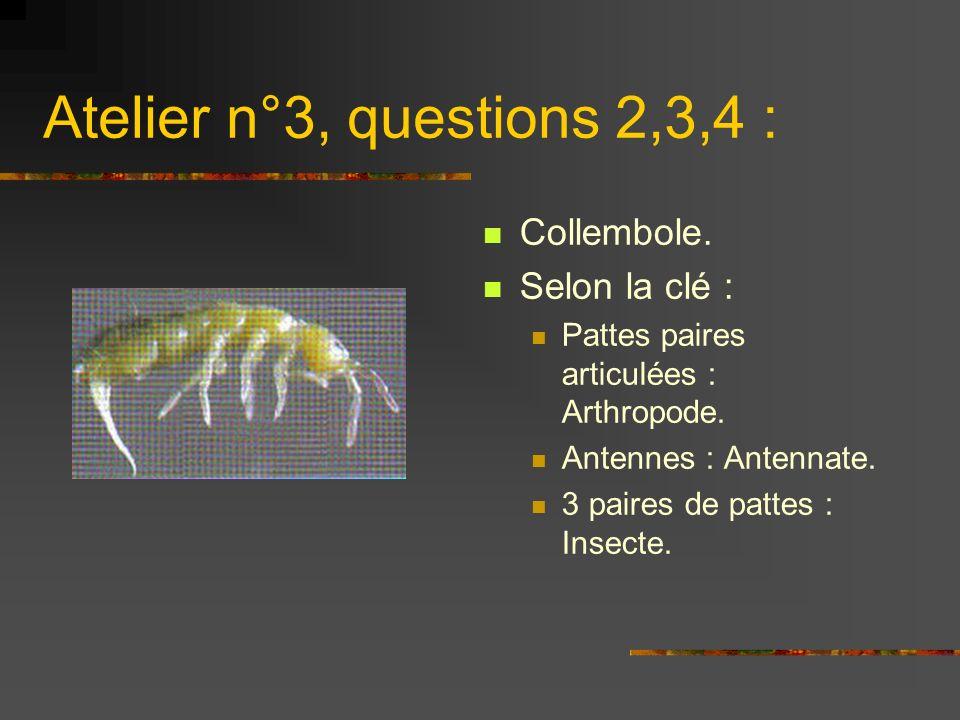 Atelier n°3, questions 2,3,4 : Collembole. Selon la clé :