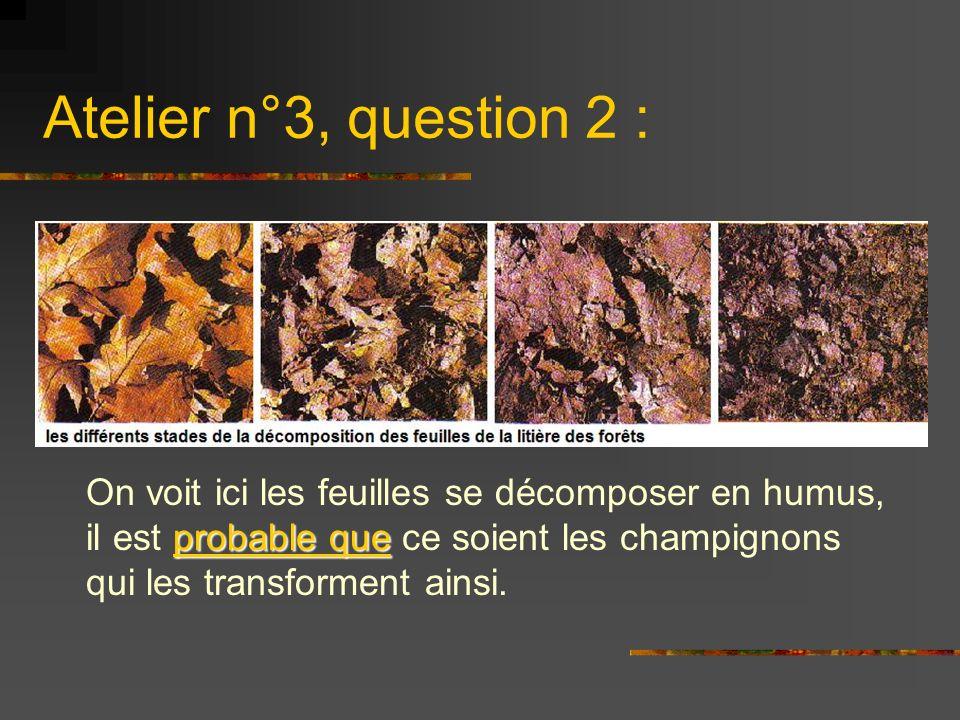 Atelier n°3, question 2 : On voit ici les feuilles se décomposer en humus, il est probable que ce soient les champignons qui les transforment ainsi.