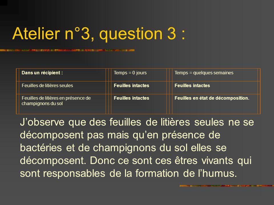 Atelier n°3, question 3 : Dans un récipient : Temps = 0 jours. Temps = quelques semaines. Feuilles de litières seules.