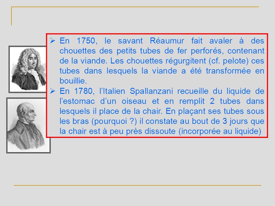 En 1750, le savant Réaumur fait avaler à des chouettes des petits tubes de fer perforés, contenant de la viande. Les chouettes régurgitent (cf. pelote) ces tubes dans lesquels la viande a été transformée en bouillie.