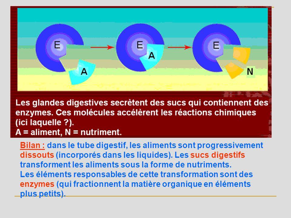 Bilan : dans le tube digestif, les aliments sont progressivement dissouts (incorporés dans les liquides). Les sucs digestifs transforment les aliments sous la forme de nutriments.