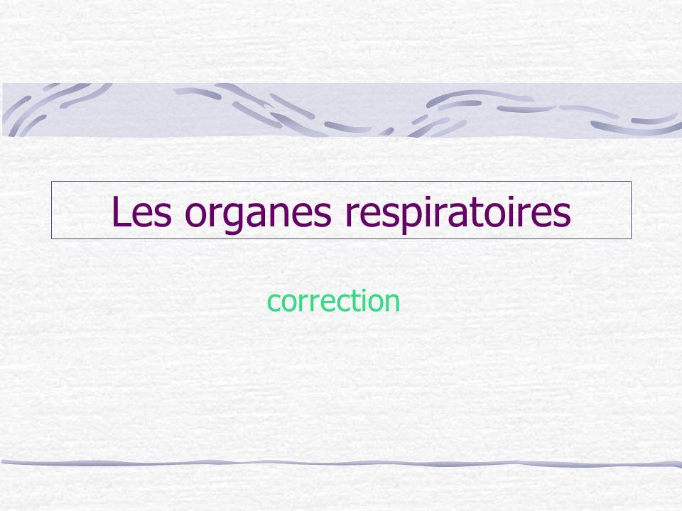 Les organes respiratoires