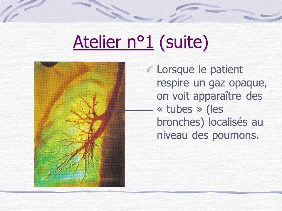 Atelier n°1 (suite)Lorsque le patient respire un gaz opaque, on voit apparaître des « tubes » (les bronches) localisés au niveau des poumons.