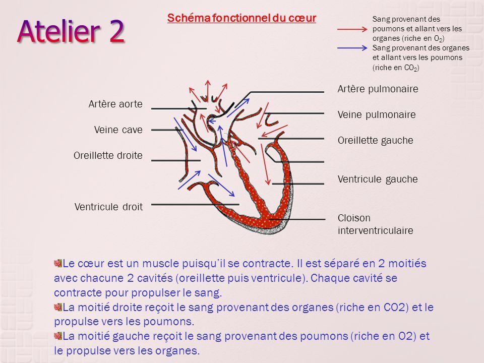 Atelier 2 Schéma fonctionnel du cœur